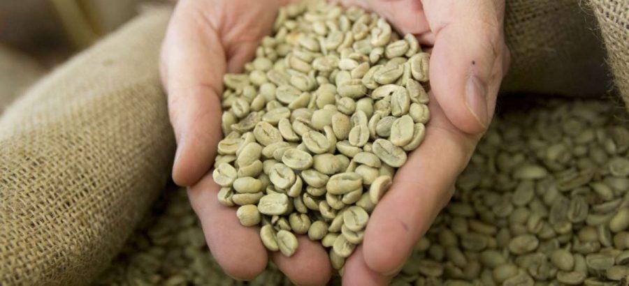 numero di telefono premium per caffè verde